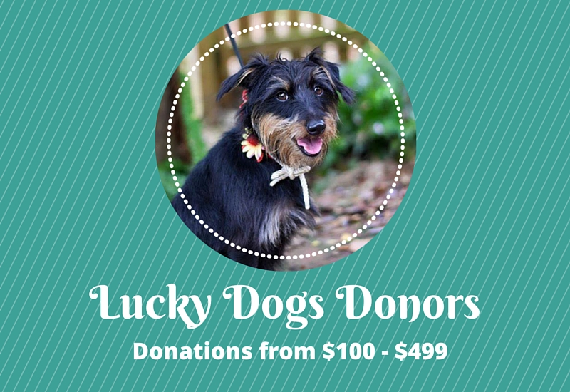 Who is a Lucky Dawg?